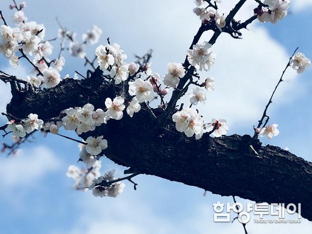 [기자수첩] 춘래불사춘(春來不似春)
